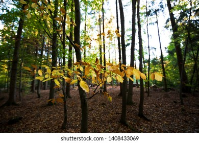 The forest turns colorful for the fall Season