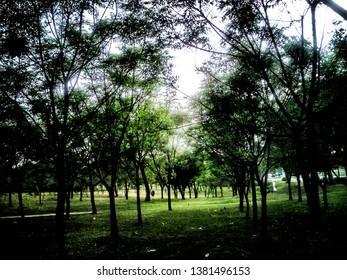 Forest type scene in the Fatima Jinnah Park, Islamabad, Pakistan.