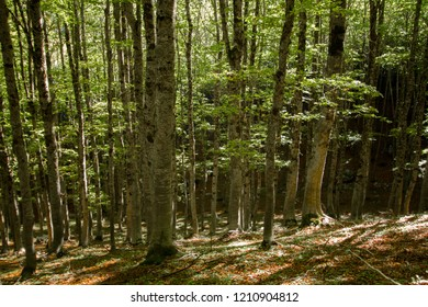 forest uncontaminated nature national park abruzzo italy national park abruzzo italy