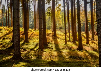 A forest under Stribrny hill near Kytlice village during autumn evening. - Shutterstock ID 1211536138