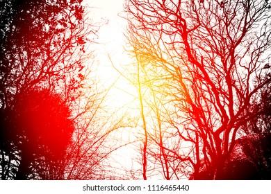 Forest Under Sunset