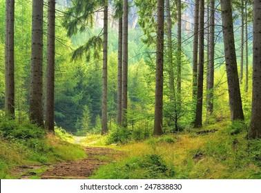 forest , unfocused