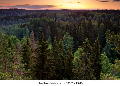 Forest valley before sunrise in magical early morning light in Nuuksio National Park, Finland