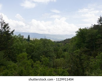 forest valley with mountains on the horizon