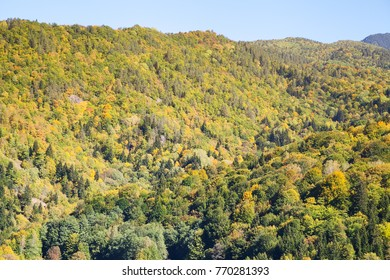 forest valley on a hill in autumn with blue sky
