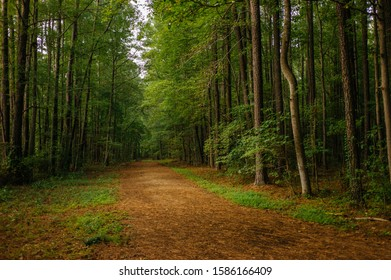 Forest Vegetation in North Carolina with walking path in a park