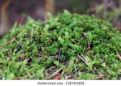 Forest vegetation in summer