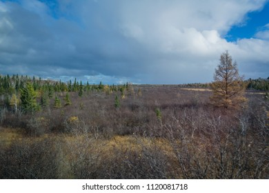 Forest view in autumn with bare birch trees and green pine trees