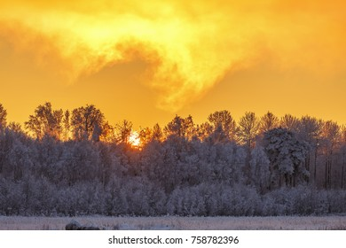 Forest view with frost at a sunset with a colorful sky