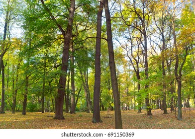 Forest View Forest Landscape