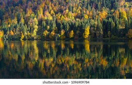 Forest at Waegitalersee in beautiful autumn fall colors, Schwyz, Switzerland, Europe