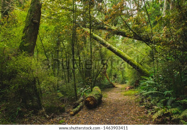 Forest walk in the Blue Mountains, New Zealand