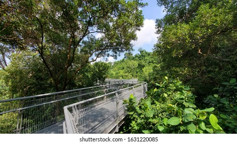 Forest Walk city trail in Singapore