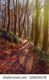 Forest walk at the end of autumn