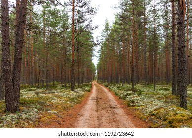 Forest walking road in Viru raba in the Lahemaa National Park in Estonia. Summer cloudy day.
