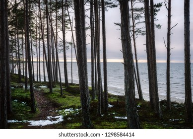 Forest way near the Baltic sea in spring