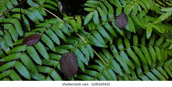 Forest wet green leaves.