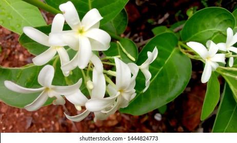 forest white flower cen welpaper