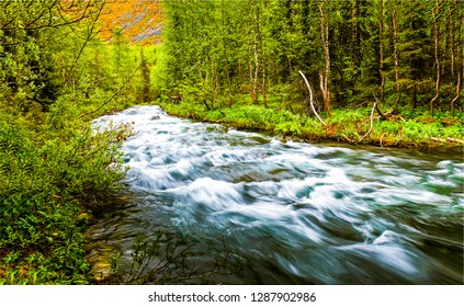 Forest wild river landscape. Forest river flowing. Wild river in forest
