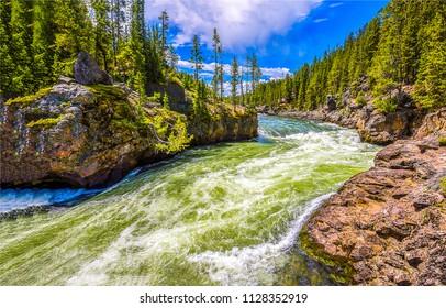 Forest wild river stream landscape