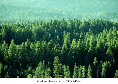 Forest in the Wilderness mountains green growth
