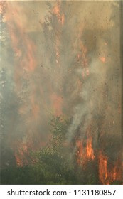 Forest wildfire close shot, day