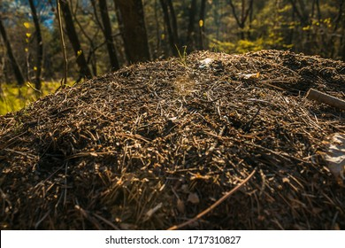 Forest Wildlife - Ants and Beetles