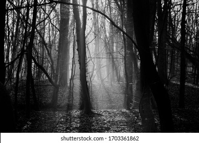 forest in the winter in Black and White , with Leafless trees and the sunshine