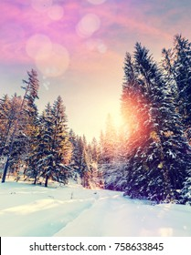 Forest in winter covered by snow. pine trees under sunlight. wintry scene with colorful sky. road in the forest. instagram filter. soft light effect