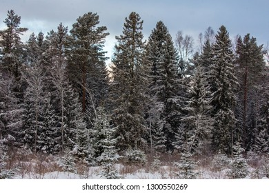 Forest at winter with a lot of snow