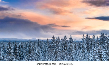 Forest in winter with snow and a colorful sunset sky.