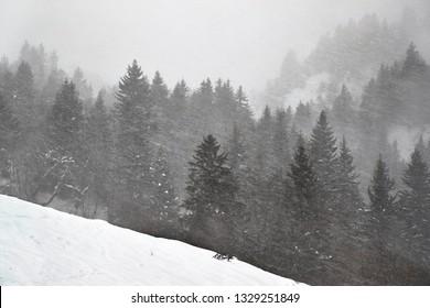 Forest in winter snow falling heavily blown by wind