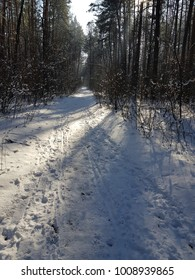 Forest in winter time