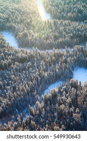 Forest in winter, top view