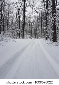 forest in winter weather
