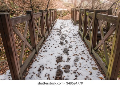 Forest and wood bridge in winter.