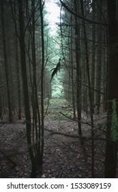 Forest wood scary creepy leaf path