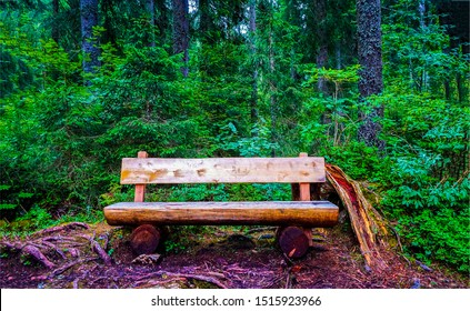 Forest wooden bench scene. Wooden bench in deep forest. Forest wooden bench. Wooden bench in forest