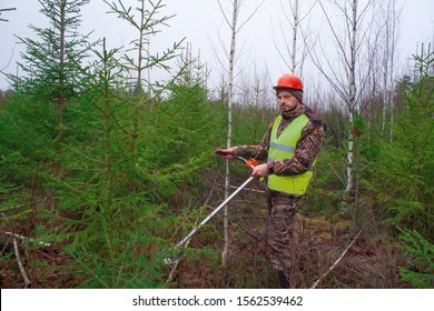 Forest worker caring for forest planting. growing young forest and lumberjack with trimmer. Forestry and afforestation.