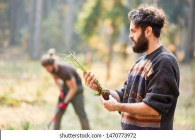 Forest worker looks at a pine seedling while reforesting in the forest