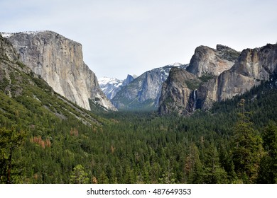 Forest of Yosemite