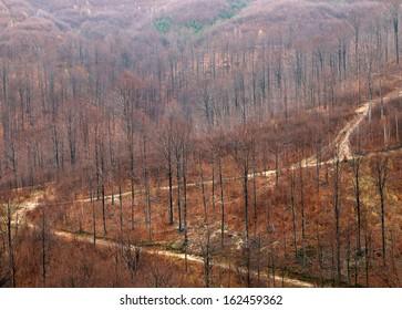 Forestal exploitation road
