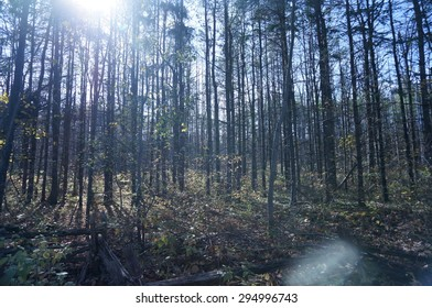 forested area northern ontario