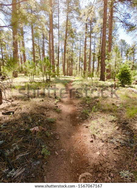 A forested, biking and hiking trail in the Kaibob National Forest, near the Grand Canyon, Arizona.