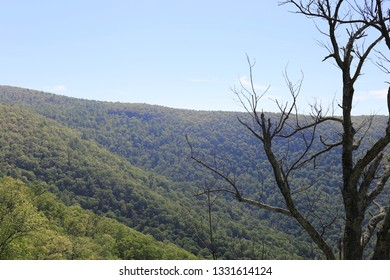 Forested mountain with a scraggly, dead tree on the right side of the foreground