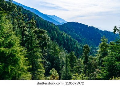 Forested mountain slope with the evergreen conifers shrouded in mist in a scenic landscape view at Mcleodganj, Himachal Pradesh, India.