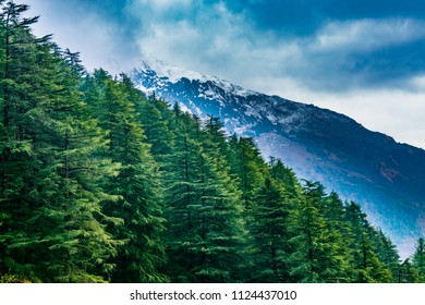 Forested mountain slope with the evergreen conifers shrouded in mist in a scenic landscape view at Mcleod ganj, Himachal Pradesh, India.