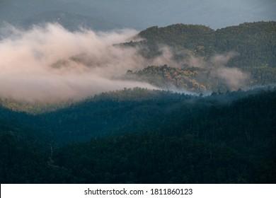 Wäldlicher Berghang in tief liegender Wolke mit immergrünen Bäumen in Nebel in malerischer Landschaftssicht