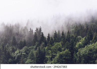 Photo of Forested mountain slope in low lying cloud with the evergreen conifers shrouded in mist in a scenic landscape view