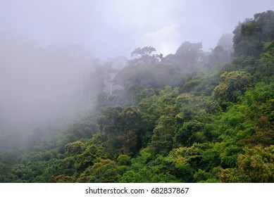 Forested mountain slope in low lying cloud with the evergreen shrouded in mist in a scenic landscape view